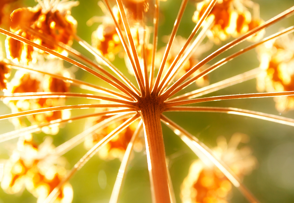standish_shutterstock_113458594fallflower