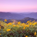 standish_shutterstock_66822982yellowflowersmountain