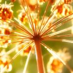 shutterstock_113458594fallflower_accueil