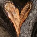 shutterstock_745265treebreakingheart