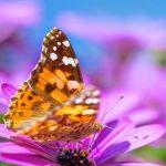 shutterstock_187001783papillonfleurmauve