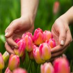 shutterstock_590698607mains_tulipes