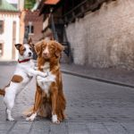 shutterstock_473047369chiens_amoureux