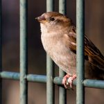 shutterstock_100795660sparrow_cage